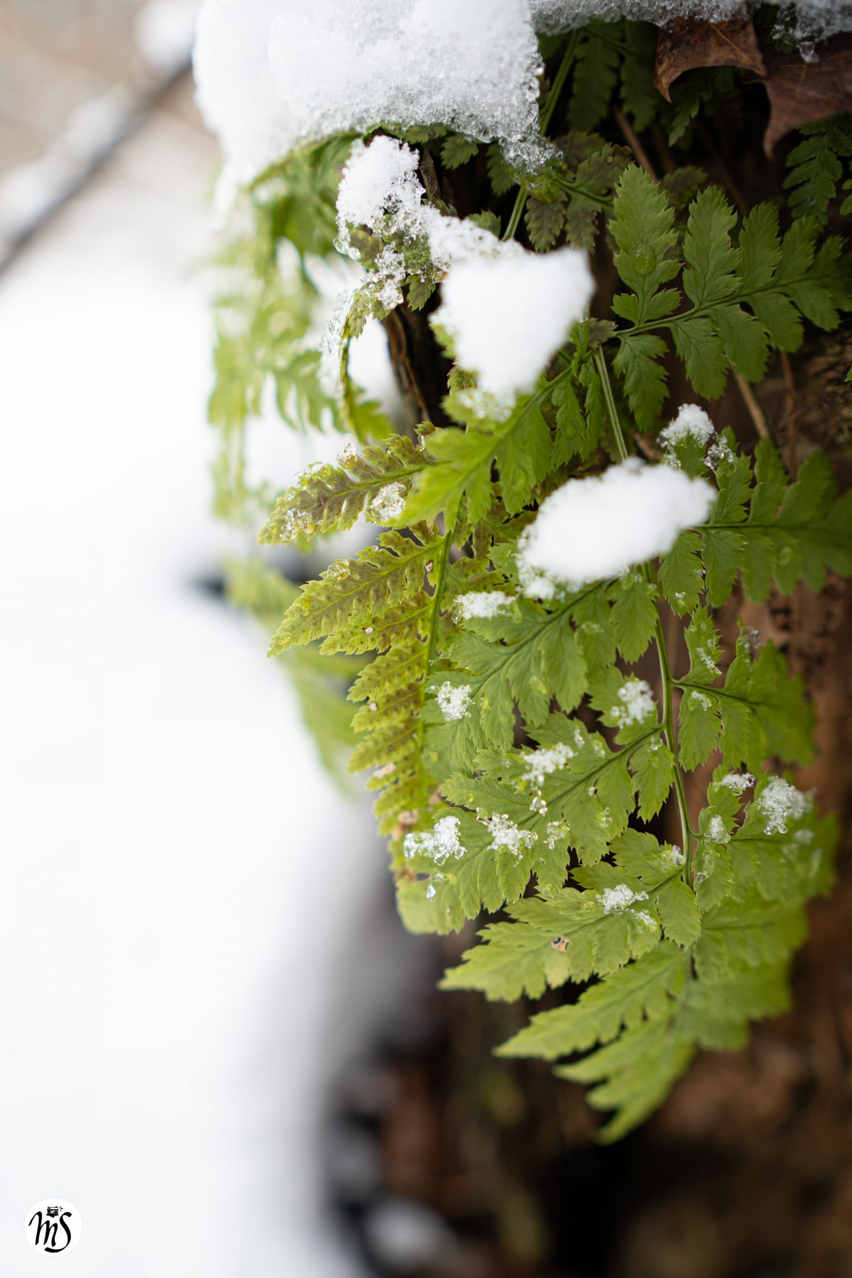 Snow Day 29.12
